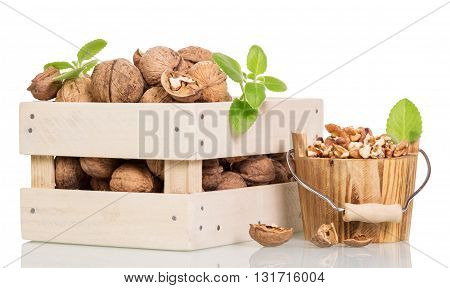 Walnut kernels in a wooden bucket and a box of whole isolated on white background.