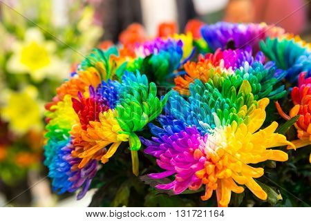 Multicolored marguerites