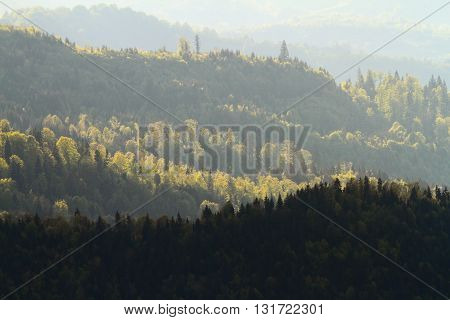 sun light over the woods at dawn Rodnei mountains Romania
