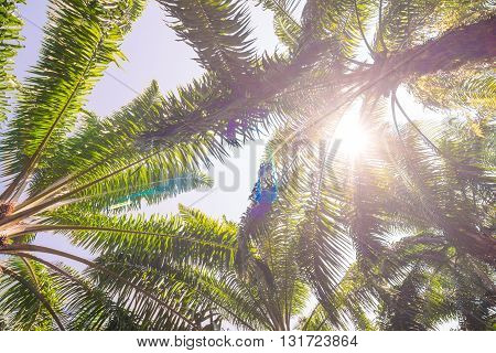 Oil Palm Plantation Tree Branches