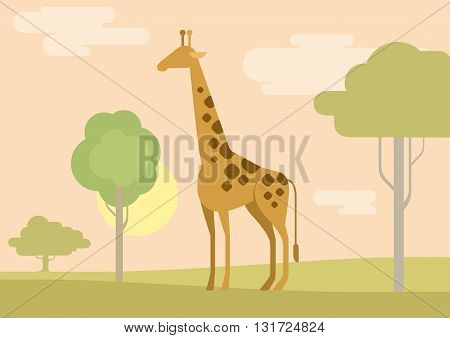 Flat design cartoon vector wild animals giraffe savanna