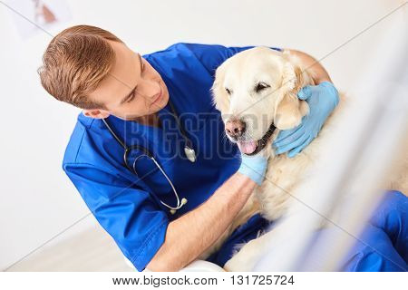 Handsome male veterinarian is caring about dog. He is sitting and stroking the pet with joy. The animal is lying on his knees with happiness