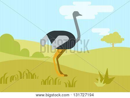 Ostrich flat design cartoon vector wild birds