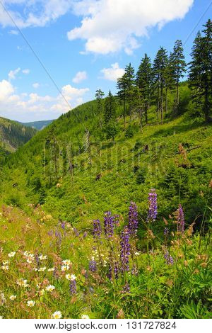 Jeseniky Mountains Nature