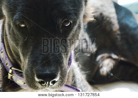 black dog on shadow in the house