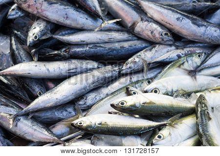 Fresh Raw Mackerel Fish In Market