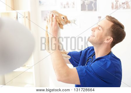 Attractive male veterinarian is examining a rabbit. He is holding a pet and smiling