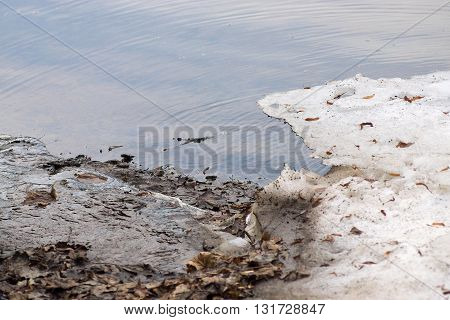 spring landscape of the coast of the lake or puddle with dirty snow for a natural seasonal background