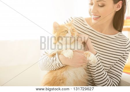 Pretty girl is playing with her cat. She is holding a pet and smiling. The lady is sitting at home. Copy space in left side