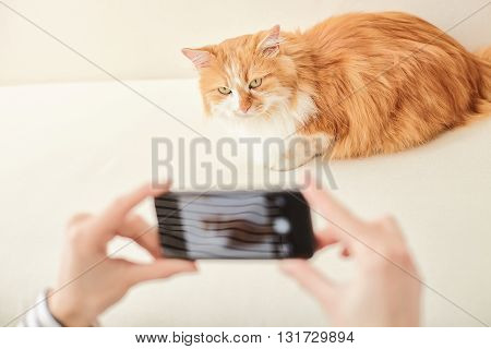 Close up of female hands photographing her cat on mobile phone. The animal is sitting on sofa