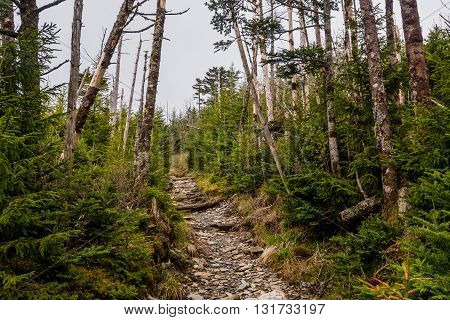 Trail to Mount LeConte Village in the Great Smoky Mountains National Park