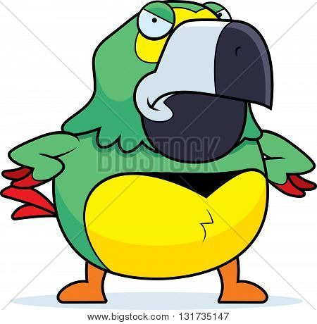 Angry Cartoon Parrot