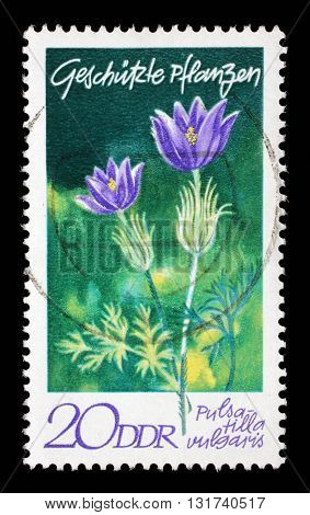 ZAGREB, CROATIA - JULY 02: A stamp printed in GDR shows Pulsatilla vulgaris, series Protected Plants, circa 1970, on July 02, 2014, Zagreb, Croatia