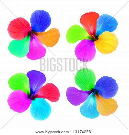 Set of multicolored flowers isolated on white background. Digitally altered image.