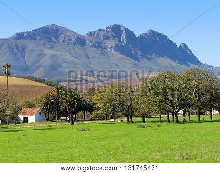 Grape Farming Area, Stellenbosch Cape Town South Africa 06