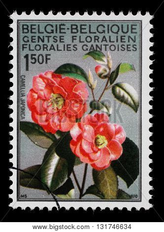 ZAGREB, CROATIA - JULY 03: a stamp printed in the Belgium shows Camellia, Flower, International Flower Exhibition in Gent, circa 1967, on July 03, 2014, Zagreb, Croatia