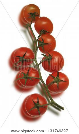 RED TOMATO SLICES COLLECTION