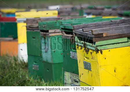 Horizontal close up of some colored bee hives lined up in a green field with bees flying around