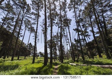 Coastal California Marin Headlands forest cove in Golden Gate National Recreation Area near San Francisco.