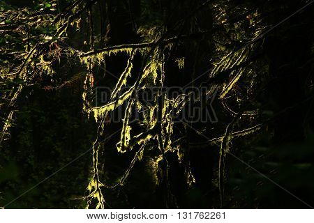 a picture of an exterior Pacific Northwest forest Douglas fir tree and moss