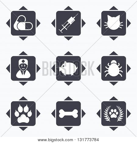 Icons with direction arrows. Veterinary, pets icons. Paw, syringe and bone signs. Pills, cat and doctor symbols. Square buttons.