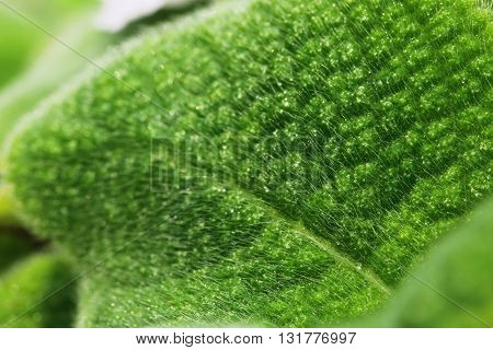 The green leaves surface used as background