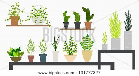 mini plants and flower on the shelves