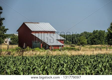 Classic Red Amish Barn and Corn Fields