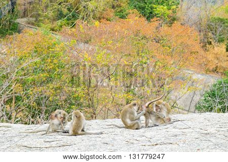 Monkey family are having fun on their activities