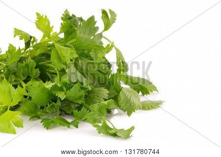 Fresh Celery Leaf Isolated On White