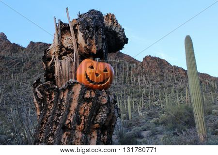 Halloween Jack o Lantern displayed in the Skeleton of a Saguaro Cactus