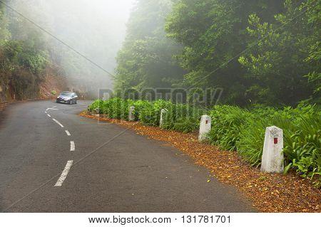 Alpine road in Madeira island, Portugal, Europe