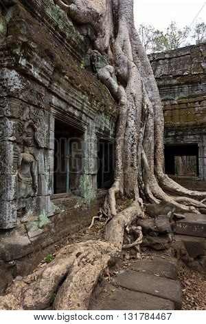 Tree Roots Over Windows At Ta Prohm