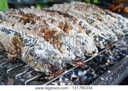 Close up of Freshwater fish GrillStriped snakehead fish