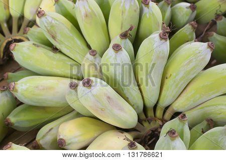 banana on wood table : raw banana