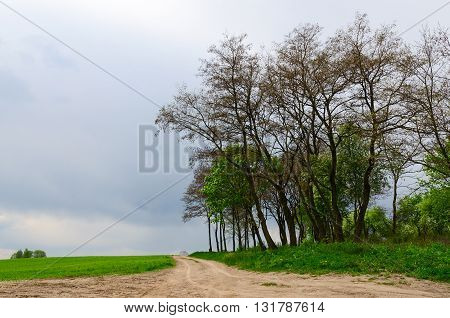 Country road between agricultural green field and trees