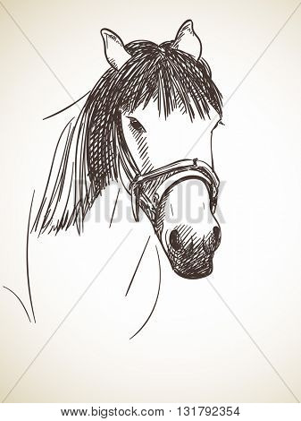 Sketch of horse's head, Hand drawn illustration