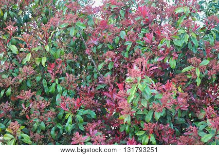 Bush Of Small Plants