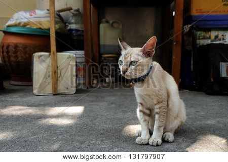 cat was sitting on the floor in the thai temple area at Pattaya, Thailand. she's very cute, seem like she waiting for her owner coming back.  a bit dirty but still adorable. this is a street life.
