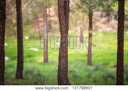 Beautiful photo of a tree trunk in the forest.