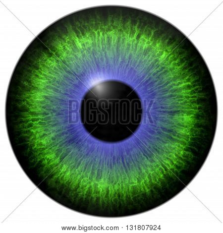 Green - blue eye iris isolated element on white background