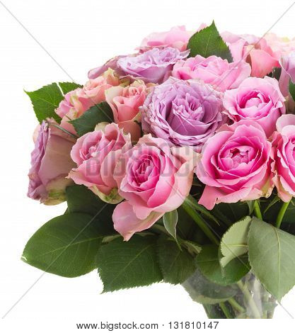 posy of pink and violet fresh blooming roses closeup isolated on white background