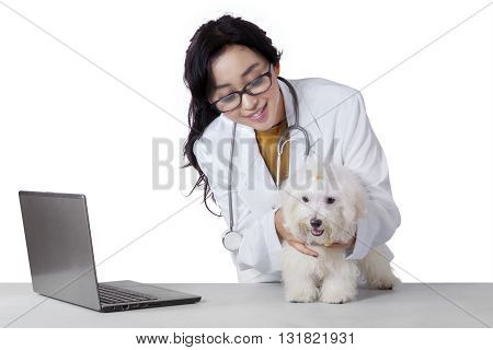 Portrait of a young female veterinarian checks the maltese dog fur with laptop on desk