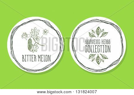 Ayurvedic Herb Collection. Handdrawn Illustration - Health and Nature Set. Natural Supplements. Ayurvedic Herb Label with Bitter melon