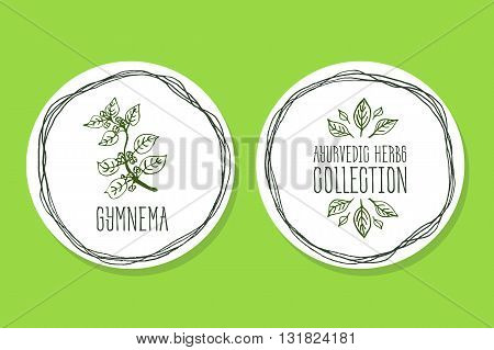 Ayurvedic Herb Collection. Handdrawn Illustration - Health and Nature Set. Natural Supplements. Ayurvedic Herb Label with Gymnema sylvestre