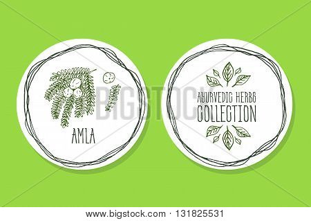 Ayurvedic Herb Collection. Handdrawn Illustration - Health and Nature Set. Natural Supplements. Ayurvedic Herb Label with Amla