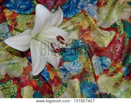 white Lily rests on a multicolored silk, laid in a fold