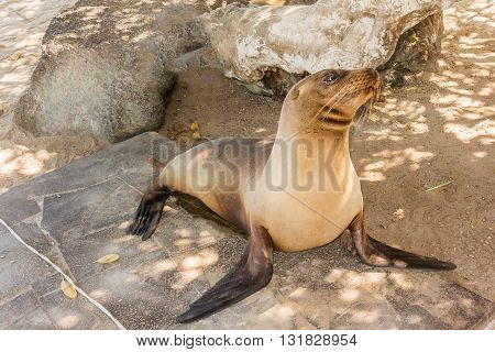 Sea Lion On The Beach, Galapagos Islands