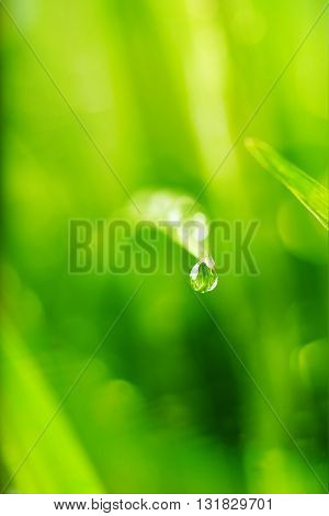 nature background with drop