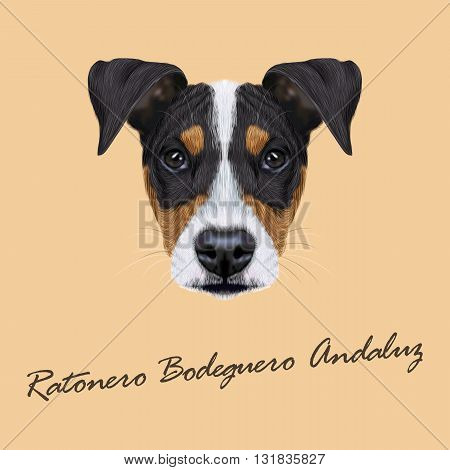Vector illustrated Portrait of Ratonero Bodeguero Andaluz dog. Cute face of domestic dog on beige background.